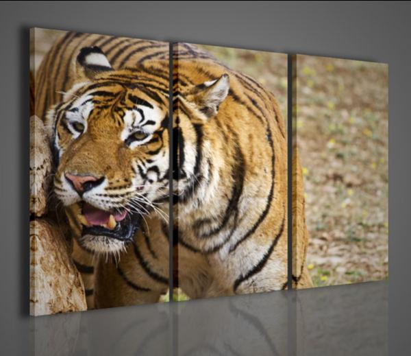 Quadri Moderni-Quadri Animali-Tigre Safari   Arredamento ...