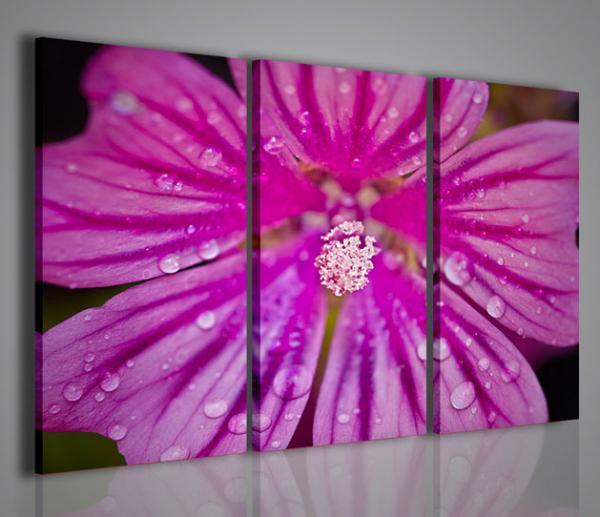 Quadri moderni quadri fiori e piante wildflower for Piante arredamento moderno
