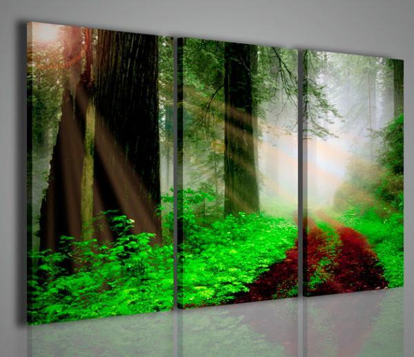 Quadri moderni quadri di natura e paesaggi redwood park - Quadri da parete moderni ...