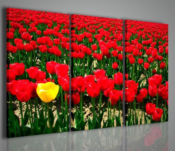 Quadri Moderni-Quadri Fiori e Piante-Singular Tulips | Arredamento ...